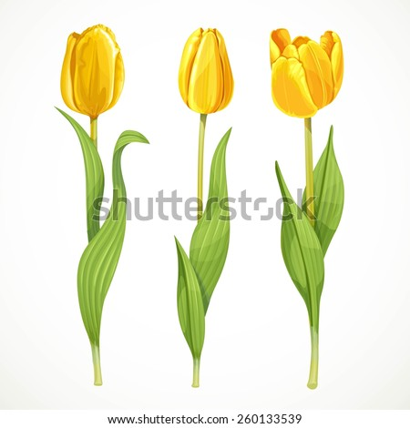 three vector yellow flowers
