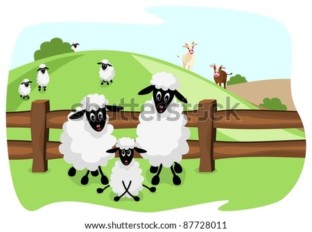 three white sheep on pasture with a wooden fence and landscape in background