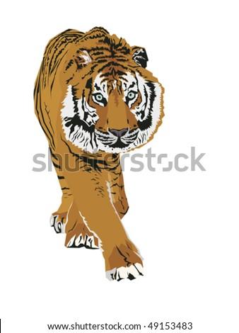 stock-vector-tiger-49153483.jpg