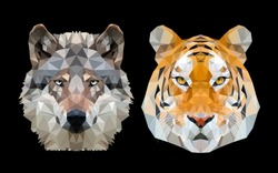 Tiger and Wolf in  night sky. vector illustration