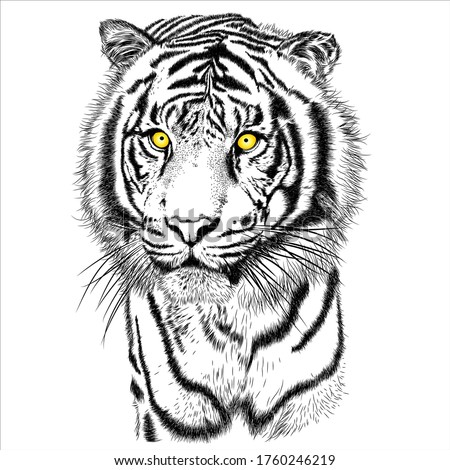 tiger animal illustration