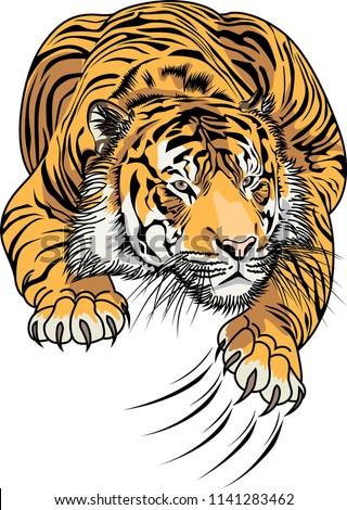 tiger art vector illustration