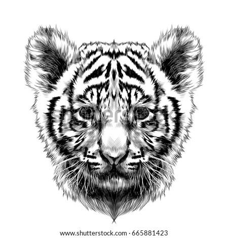 tiger cub head sketch vector