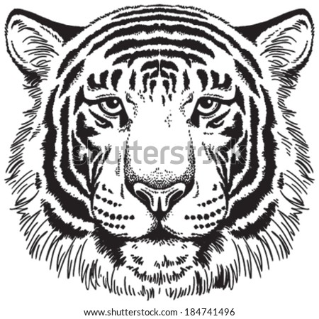 Tiger Face: Black And White Vector Sketch - 184741496 ...
