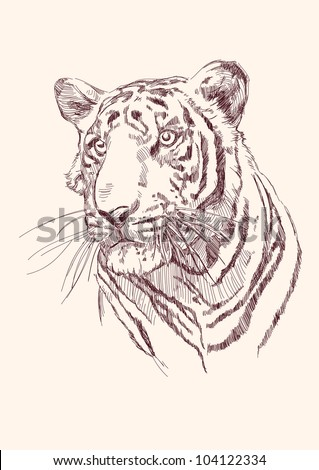 Tiger hand drawn vector llustration realistic sketch