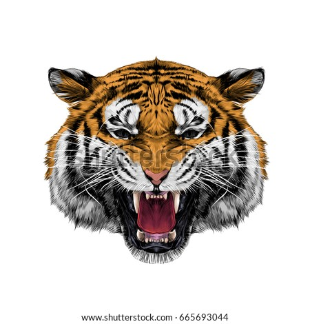 tiger head growling sketch
