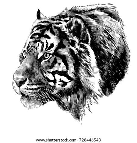 tiger head sketch vector