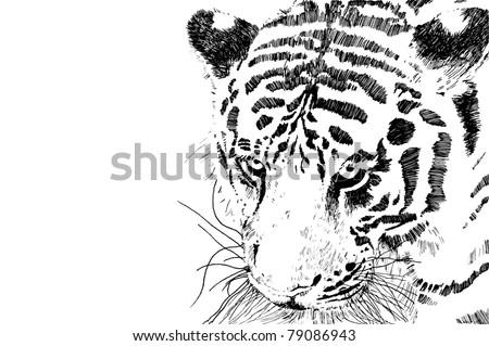 tiger head vector eps 10 of