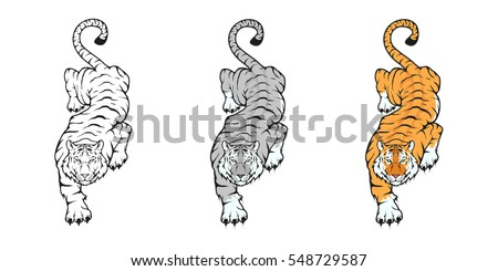 tiger  isolated on white