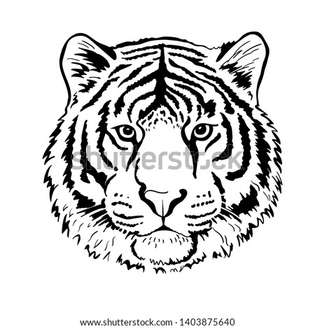 tiger portrait head isolated on