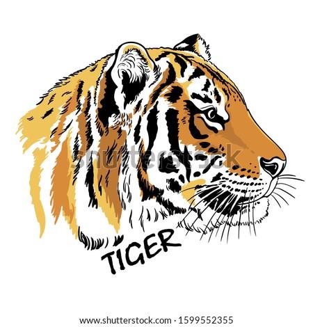 tiger portrait  in profile head