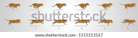 tiger run cycle animation