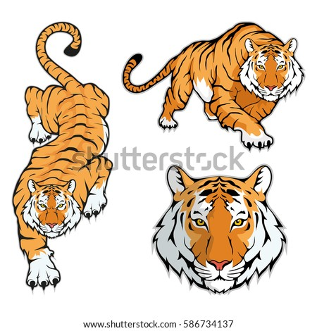 tiger set  isolated on white