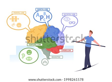Tiny Male Character Balancing on Rope at Huge Human Brain Anatomy Separated on Colorful Parts Frontal, Parietal, Occipital, Temporal Lobes, Cerebellum, Brainstem. Cartoon People Vector Illustration Foto stock ©
