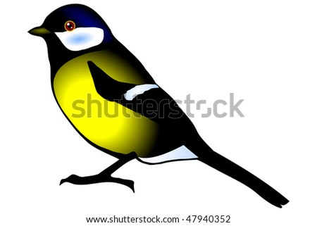 tit, oxeye (Pants major), isolated on the white background
