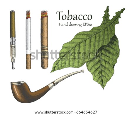 tobacco collection hand drawing