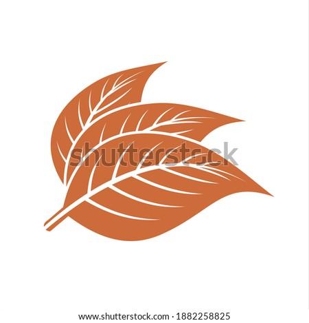tobacco leaf vector. tobacco icon. cigarette. Stock photo ©