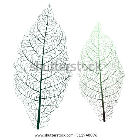 tobacco leaf with veins