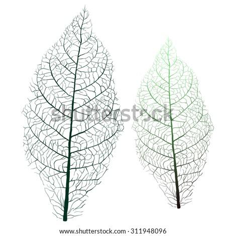 tobacco leaf with veins