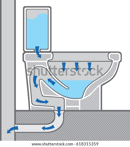 toilet bowl structure (system) cross section