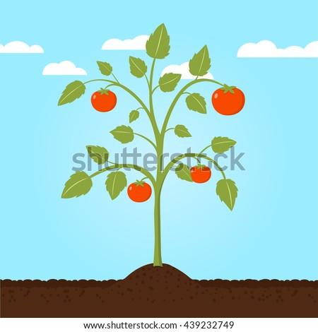 tomato plant flat design