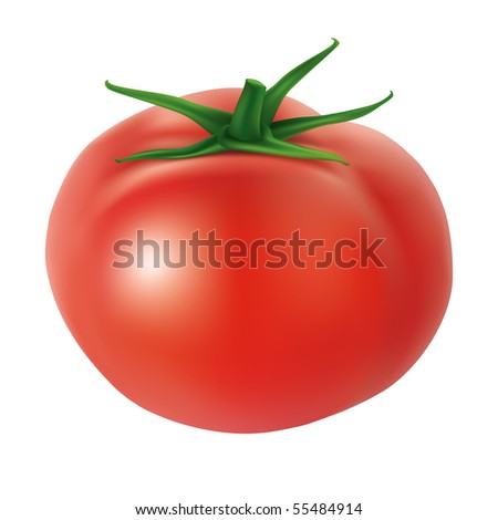 Tomato - Vector illustration of vegetable. 