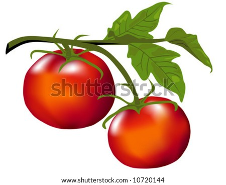 Tomatoes on the Vine vector is hand drawn original artwork.