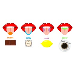 Tongue taste areas. Four sections of projection - sweet, salty, sour and bitter  - represented by chocolate, salt, lemon and black coffee. Simple flat vector illustration isolated on white background.