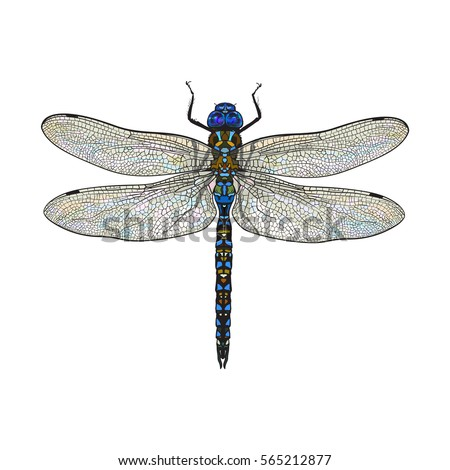 top view of blue dragonfly with