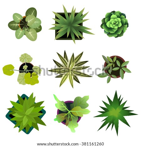 Shutterstock Top view. plants Easy copy paste in your landscape design projects or architecture plan. Isolated flowers on white background. Vector eps 10