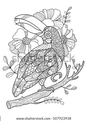 toucan bird coloring book for