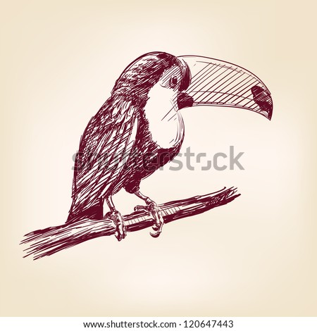 toucan hand drawn vector llustration realistic sketch