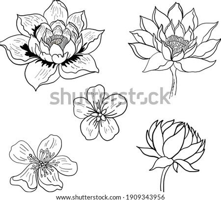 traditional asian flower vector
