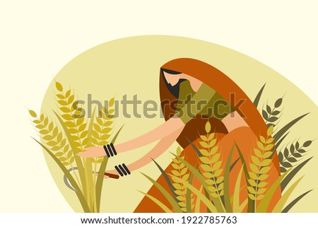 Traditionally dressed Indian woman harvesting wheat using a sickle Foto stock ©