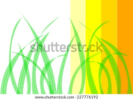 transparent grass  lines and