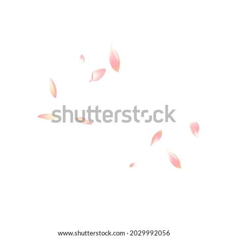 Transparent Lotus Petal Vector White Background. White Free Apple Petal Poster. Sakura Petal Fly Backdrop. Floor Flower Petal Illustration.