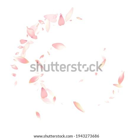 Transparent Sakura Petal Vector White Background. Purple Spa Rose Petal Card. Peach Petal Free Design. Fly Lotus Petal Poster.