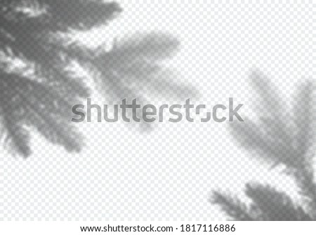 transparent vector shadow of