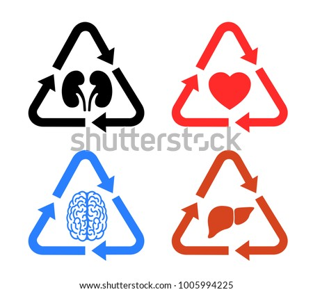 Transplantation of human organs - kidneys heart, brain, liver. Donation of donated part of body from donator into patient. Vector illustration