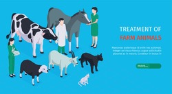 Treatment of farm animals horizontal web banner with veterinarians who care for pets isometric vector illustration