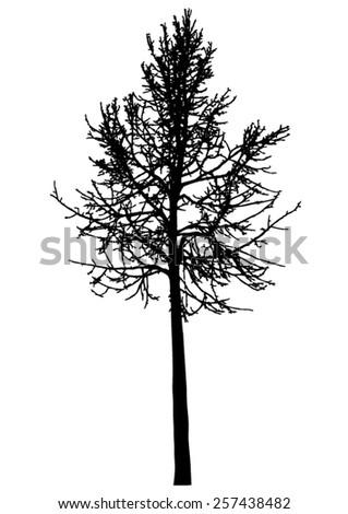 tree   bare branches   black
