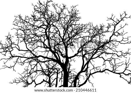 tree branch black shadow  eps
