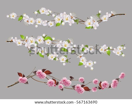 Tree branch, spring flowers 3d vector set