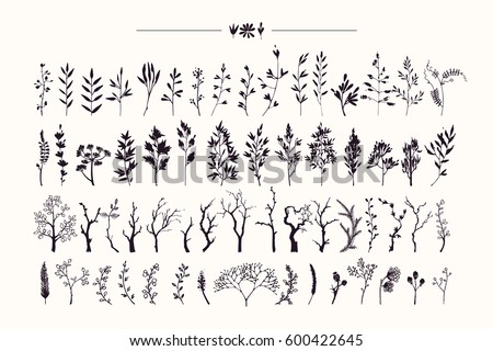 tree branches   plants...