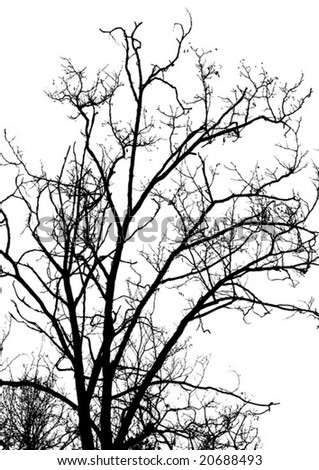 Tree contours vector illustration
