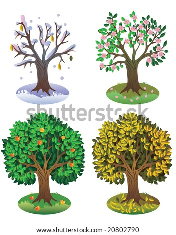 stock vector : Tree during different seasons of year