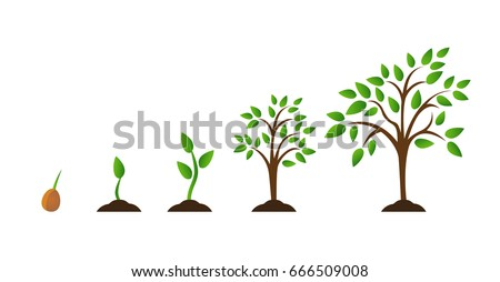 Tree growth diagram with green leaf, nature plant. Set of illustrations with phases plant growth. Flat style. growing tree
