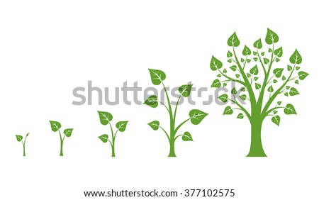 Tree growth diagram with green leaf, nature plant. Vector illustration