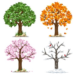 Tree in four seasons - spring, summer, autumn, winter. Vector illustration. Isolated on white background.