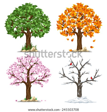 tree in four seasons   spring